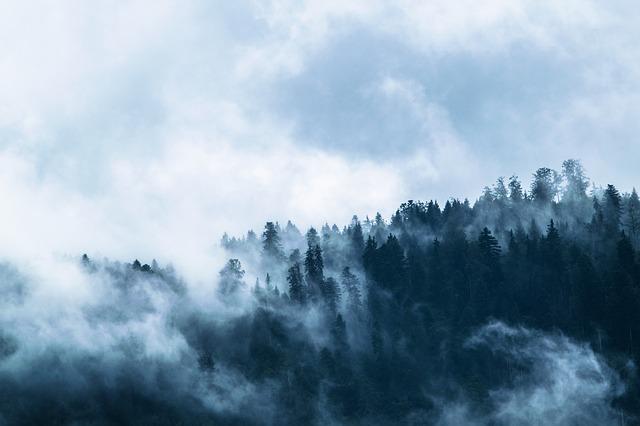 les, mlha, mraky